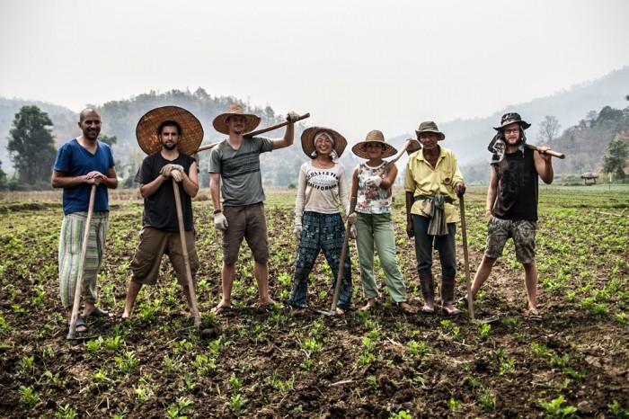 Tartu noor bioloog Fred Väärtnõu (paremalt esimene) Taimaal Mindful Farmis koos vabatahtlike rahvusvahelise seltskonnaga maapähklipõldu harimas. Foto: Miléna Berndt