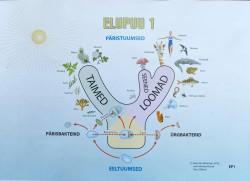 Elupuu ehk nn puukujuline süsteem elusolendite ja nende kogumite struktureerimiseks. illustratsioon: Raik-Hiio Mikelsaare ettekandest