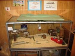 Terraarium Mahnala lasteaias. Selle puhtuse ning asukate – liivahiirte ja suure teo toitmise eest vastutavad lapsed ise.