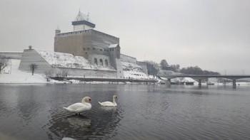 Fotomälestus eelmise aasta sügistalvest. Luikesid pole Maarja Hein varem ega hiljem Narva jõel näinud.