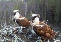Foto: looduskalender.ee