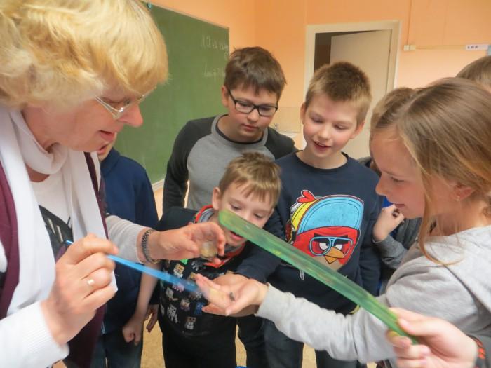 """Veeriku kooli kolmas klass jälgib rööviku arenemist liblikaks. Kordamööda mõõdetakse klaastopsis elutsevat tegelast ja täidetakse kontroll-lehte. """"Püüame tuua loodust klassi. Laps ei märka, kui teda ei suunata, vanematel pole aega endalgi näha. Lapsi huvitab, nad on õhinas,"""" ütleb õpetaja Saima Alliksaar. Foto: Sirje Pärismaa"""