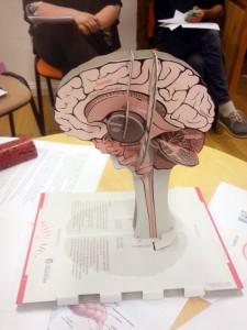 Osalejad said uurida, milline on naiste ja meeste aju. Foto: erakogu