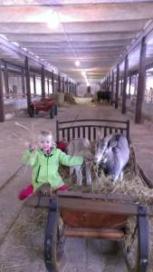 Muuseumi kitsed tunnevad ennast laste seltsis hästi. Foto: Liina Marandi