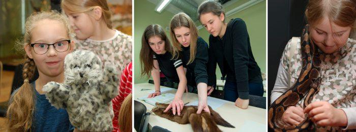 Muuseum pakub mängulisi õppeprogramme, võimalust õppida tundma Eesti imetajaid ja elavnurgas saab tutvuda eksootiliste lemmikloomadega. Fotod: Karin Pai, Andres Tennus