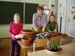 Tomatitaimede ümberistutamine Jõhvi vene gümnaasiumis. FOTOD: http://tomatiprojekt.blogspot.com/