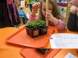 """""""Kas siin on kirjas 6 või 9 sentimeetrit?"""" uurivad Märjamaa Pillerpalli lasteaia lapsed tomatitaime pikkust mõõtes."""