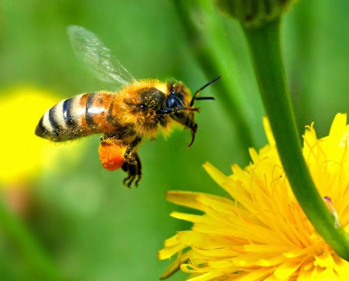 Meemesilased ja maamesilased tolmeldavad – lisaks lilledele – väidetavalt 75% neist taimedest, mille viljad on seotud inimese toiduga.