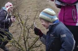 Milleks on puudel pungad? Sellele polegi nii lihtne vastata, kui pealtnäha paistab. Enne matka arutledes jõudsime järeldusele, et pungadeta poleks puudel lehti ega vilju, nii et tänavu suve õunad, ploomid ja kirsid valmivad möödunud suve päikese ja lehtede abiga.