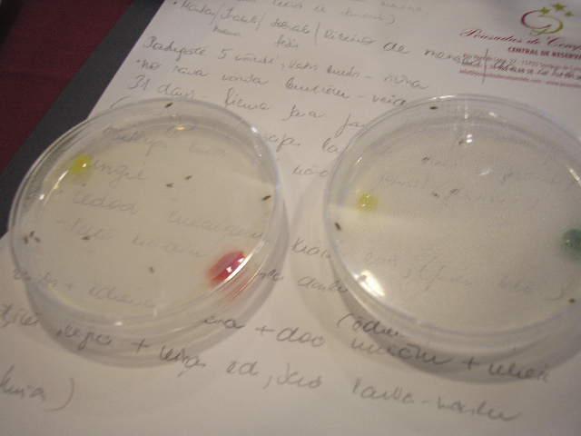 Värviliste pärmiportsudega Petri tassid kärbeste abil kunsti tegemiseks.